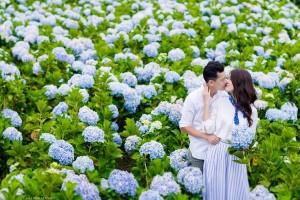 Hydrangea Flower Farm  Dalat